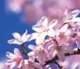 Non-Escorted Spring Kyoto, Osaka & Tokyo Mar 16 (Sat) ~ Mar 24 (Sun), 2019